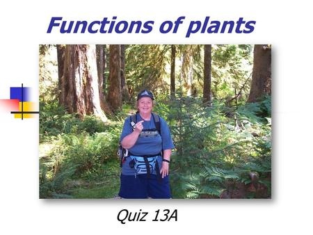 Functions of plants Quiz 13A. Plants are supported by two related systems: cell walls- cellulose turgor pressure - water pressure inside a plant cells.