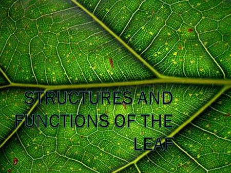 Structures and functions of the leaf