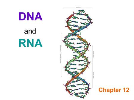 DNA and RNA Chapter 12. Types of Nucleic Acids DNA (Deoxyribose Nucleic Acid) RNA (Ribose Nucleic Acid)