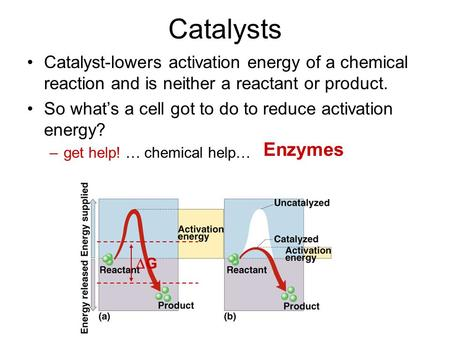 Catalysts Catalyst-lowers activation energy of a chemical reaction and is neither a reactant or product. So what's a cell got to do to reduce activation.