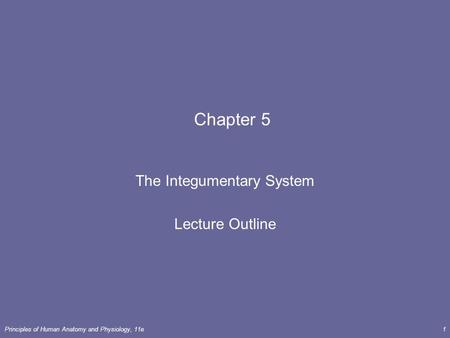 Principles of Human <strong>Anatomy</strong> <strong>and</strong> <strong>Physiology</strong>, 11e1 <strong>Chapter</strong> 5 The Integumentary System Lecture Outline.