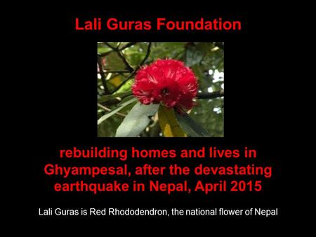 Lali Guras Foundation Lali Guras is Red Rhododendron, the national flower of <strong>Nepal</strong> rebuilding homes and lives <strong>in</strong> Ghyampesal, after the devastating <strong>earthquake</strong>.