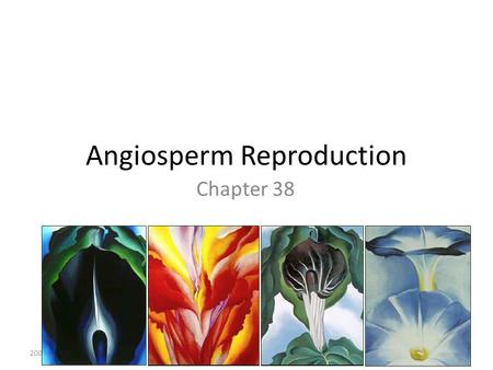 Angiosperm Reproduction Chapter 38 2005-2006. Recall: Alternation of Generations In angiosperms: – Sporophyte is dominant – Reduced gametophyte, dependent.