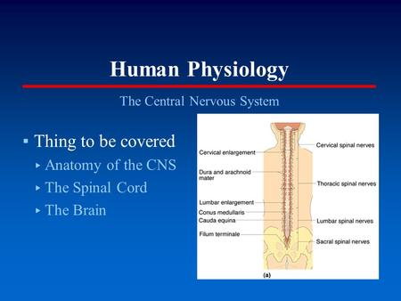 Human Physiology The Central Nervous System ▪Thing to be covered ▸ Anatomy of the CNS ▸ The Spinal Cord ▸ The Brain.