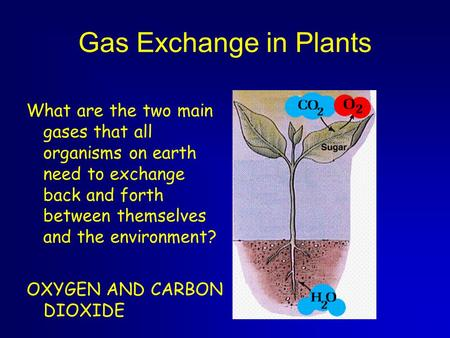 Gas Exchange in Plants What are the two main gases that all organisms on earth need to exchange back and forth between themselves and the environment?