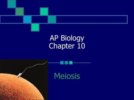 AP Biology Chapter 10 Meiosis.