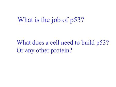 What is the job of p53? What does a cell need to build p53? Or any other protein?