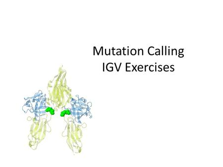Mutation Calling IGV Exercises. Run IGV – Web search IGV (Integrative Genomics Viewer) – Go to Download page – may need to provide email – Launch with.