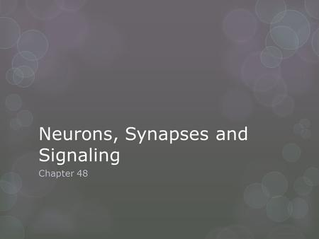 Neurons, Synapses and Signaling