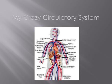 Your circulatory system a system that carries your blood throughout your body.