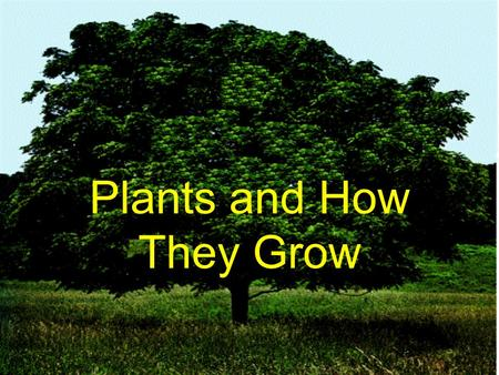 Plants and How They Grow. All living things on earth can be separated into groups. and animalsplantsTwo groups are: