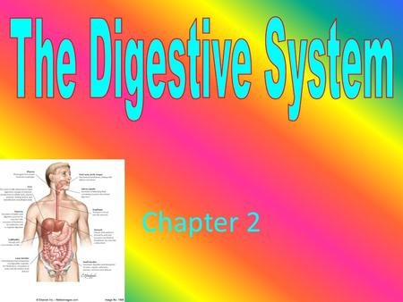 Chapter 2 2.1 Digestive Process Begins The Digestive Process Begins A.Functions Of the Digestive System 1. Three Main Functions a. Breaks down food.