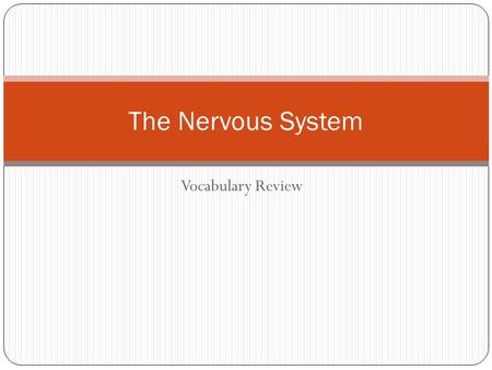 Vocabulary Review The Nervous System. Peripheral nervous system Cranial and spinal nerves outside the central nervous system Central nervous system Consists.