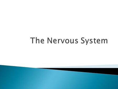 Identify the principle parts of the nervous system  Describe the cells that make up the nervous system  Describe what starts and stops a nerve impulse.