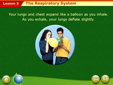 Lesson 3 The Respiratory System Your lungs and chest expand like a balloon as you inhale. As you exhale, your lungs deflate slightly.