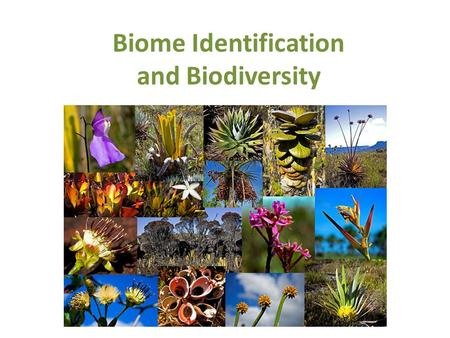 Biome Identification and Biodiversity