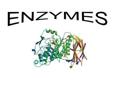 Learning Outcomes B11- analyse the roles of enzymes in biochemical reactions explain the following terms: metabolism, enzyme, substrate, coenzyme, activation.