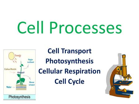 Cell Processes Cell Transport Photosynthesis Cellular Respiration Cell Cycle.
