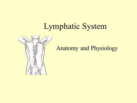 Lymphatic System Anatomy and Physiology Lymphatic System Network of vessels Transports excess fluid from around the cells to the bloodstream Lymph capillaries.