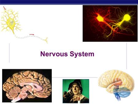 Nervous System Every time you move a muscle & every time you think a thought, your nerve cells are hard at work. They are processing information: receiving.