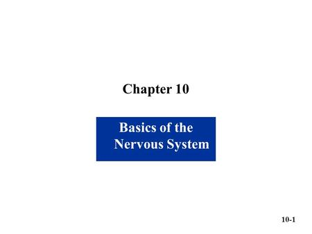Basics of the Nervous System