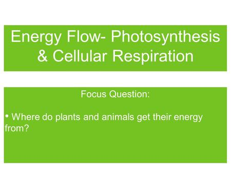 Energy Flow- Photosynthesis & Cellular Respiration
