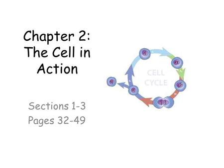 Chapter 2: The Cell in Action Sections 1-3 Pages 32-49.