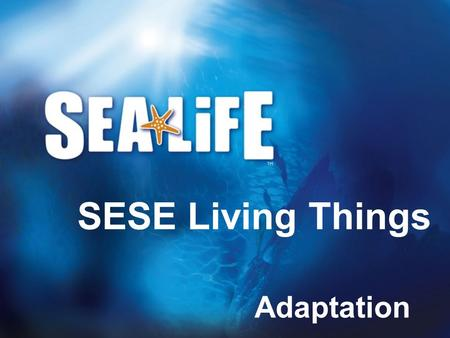 Adaptation SESE Living Things. Habitats <strong>Animals</strong> can live in all sorts of different conditions, from deserts to polar ice caps; from mountain tops to rainforests.