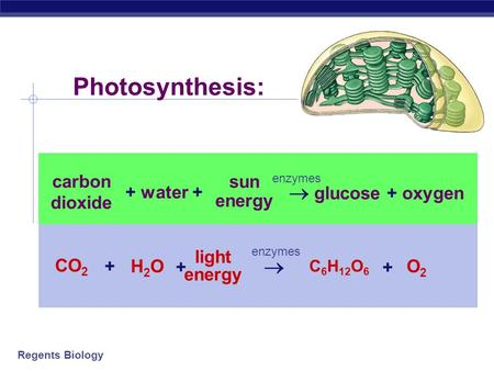 Photosynthesis:  glucose + oxygen  CO2 H2O O2 light energy + carbon