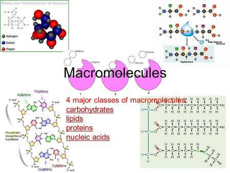 Macromolecules 4 major classes of macromolecules: carbohydrates lipids proteins nucleic acids.