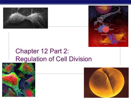 2008-2009 AP Biology Chapter 12 Part 2: Regulation of Cell Division.