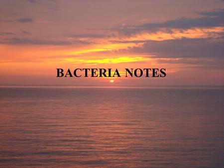 BACTERIA NOTES. 20-2 Bacteria The smallest and most common microorganisms are prokaryotes— unicellular organisms that lack a nucleus. Earliest fossils.