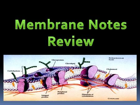 Structure of the Plasma Membrane Lipid bilayer – two sheets of lipids (phospholipids). – Found around the cell, the nucleus, vacuoles, mitochondria, and.