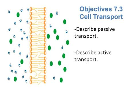Objectives 7.3 Cell Transport -Describe passive transport. -Describe active transport.