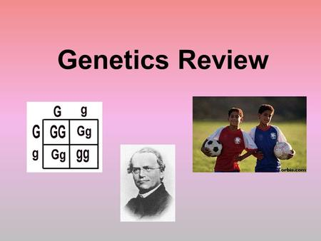 "Genetics Review. Who is the ""Father of Genetics""? Gregor Mendel What organism did Mendel use to study genetics? Pea Plants."
