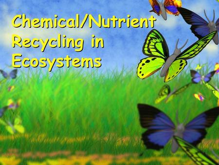 1 Chemical/Nutrient Recycling in Ecosystems. DO Now 1.In addition to energy, what do organisms need to survive?