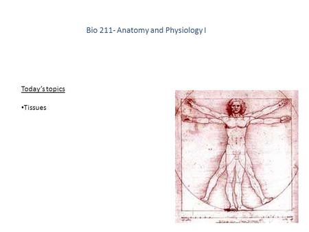 Bio 211- <strong>Anatomy</strong> <strong>and</strong> <strong>Physiology</strong> I Today's topics Tissues.