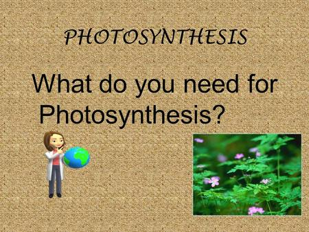 PHOTOSYNTHESIS What do you need for Photosynthesis?