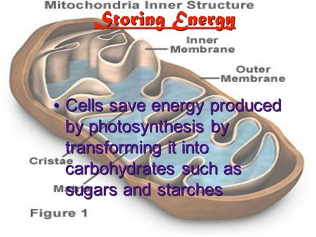 Storing Energy Cells save energy produced by photosynthesis by transforming it into carbohydrates such as sugars and starches Cells save energy produced.