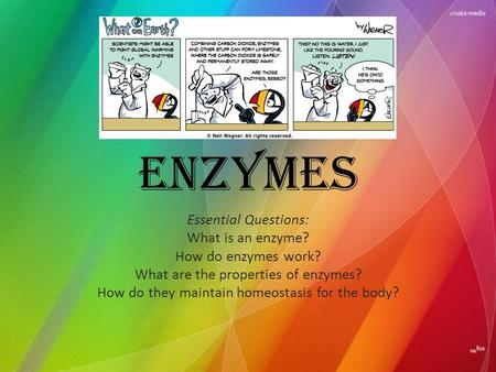 Enzymes Essential Questions: What is an enzyme? How do enzymes work? What are the properties of enzymes? How do they maintain homeostasis for the body?
