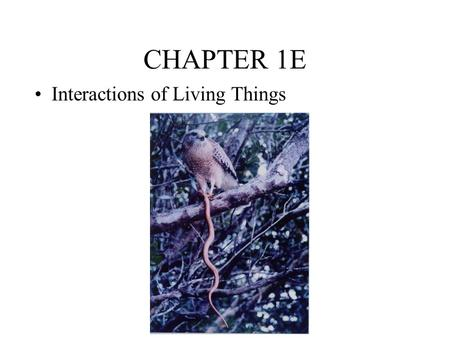 CHAPTER 1E Interactions of Living Things. Everything is Connected….. ALL Living things are connected somehow Ecology – the study of how they are connected.