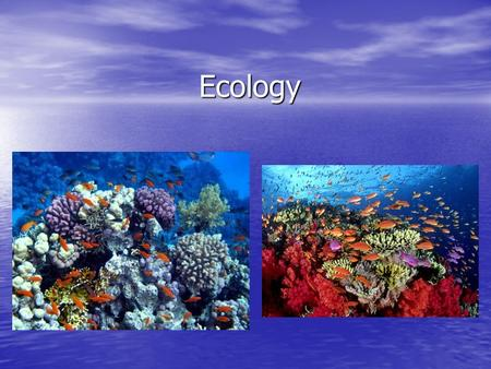 Ecology. What is Ecology? Ecology is the study of interactions among organisms, and between organisms and their environment. Ecology is the study of interactions.
