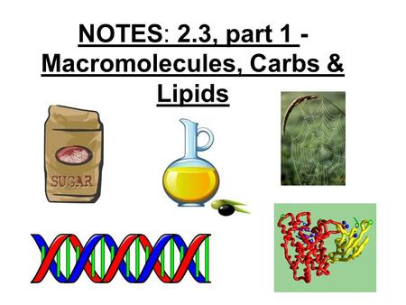 NOTES: 2.3, part 1 - Macromolecules, Carbs & Lipids.