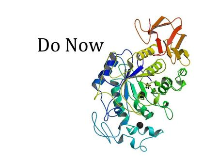 Do Now. Do Now Answers N C L L C N C A P P Enzymes Proteins that catalyzes a chemical reaction.