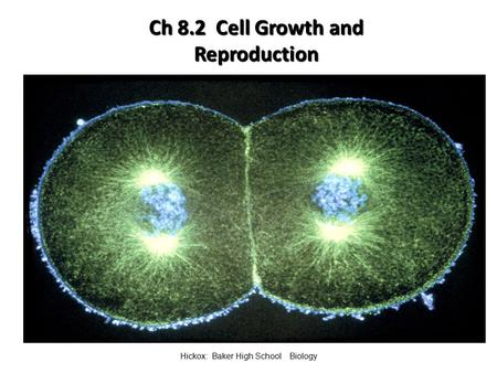 Ch 8.2 Cell Growth <strong>and</strong> Reproduction Hickox: Baker High <strong>School</strong> Biology.