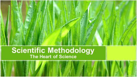 Scientific Methodology