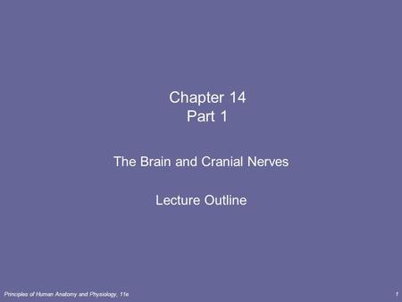 Principles <strong>of</strong> Human Anatomy <strong>and</strong> Physiology, 11e1 Chapter 14 Part 1 The Brain <strong>and</strong> Cranial Nerves Lecture Outline.