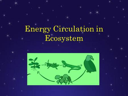 Energy Circulation in Ecosystem. Life in the Earth is possible thanks to the circulation of the energy flow into the ecosystems in a cyclical way from.