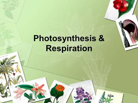 Photosynthesis & Respiration. What is Photosynthesis? It is the most important chemical reaction on our planet. Process plants use to make their own food.