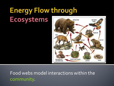Food webs model interactions within the community.